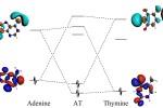 orbital level diagram bonding AT basepair